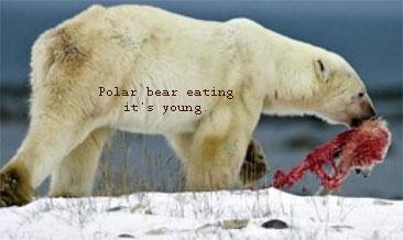 cannibear